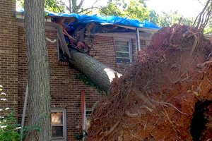 tree-falls-neighbor-noaa_3x2_2fd156fb5824e720dde3bbe43c2f3722_jpg_300x200_q85